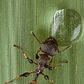 Ant Drinking From Water Droplet Papua by Piotr Naskrecki