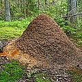 Ant Hill by Bjorn Svensson