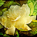 Antique Gardenia Blossom by Mother Nature
