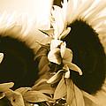 Antique Petals by Jill DeSousa