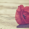 Antique Poppy by JayneBurfordPhotography