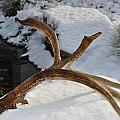 Antler 2 by Heather L Wright