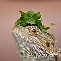 Anyone Seen My Salad? by Richard Ortolano