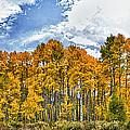 Apen Trees In Fall by John K Sampson