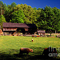 Appalachian Barn Yard by Paul W Faust -  Impressions of Light