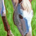 Appaloosa by Pet Whimsy  Portraits