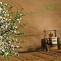 Apple Blossoms And Farmer On Tractor by John Sylvester