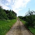 Apple Fields by Art Dingo