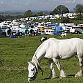 Appleby Horse Fair by Mark Richardson