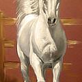 Arab Stallion by Margaret Alder
