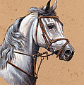 Arabian Horse by Sascha Lunyakov