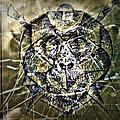 Arachnids by Paulo Zerbato