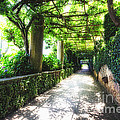 Arbor Path In Ravello by George Oze