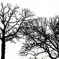Arboreal Mind Meld by Rrrose Pix