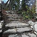 Arboretum Stairway by Tim Allen
