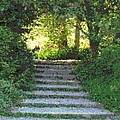 Arboretum Steps by Tim Allen