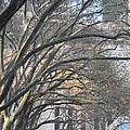 Arched Trees by Kimberly Perry