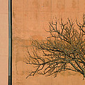 Architecture With Winter Tree by Lenore Senior