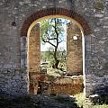 Archway At Pozos by Bryan Davies