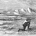 Arctic: Bear Hunting, 1871 by Granger