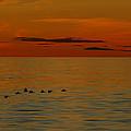 Arctic Dusk by Tony Beck