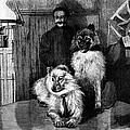 Arctic Explorer And Dogs, 19th Century by