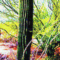 Arizona Catcus by Artistic Photos