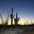 Arizona Desert Sunset by Susan Lane