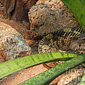 Arizona Rattler by Methune Hively