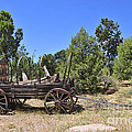 Arizona Wagon by David Arment