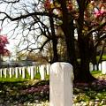 Arlington Cemetary by Darleen Stry