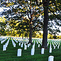 Arlington Cemetery Graves by Brittany Horton
