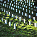Arlington Graves  by Brittany Horton