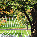 Arlington National Cemetery In The Fall  by Brittany Horton