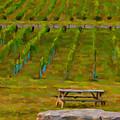 Arrington Vineyards by Paul Bartoszek