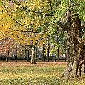 Arrival Of Autumn by Stephanie Owen