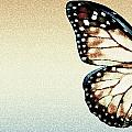 Artistic Butterfly by Chris Knorr