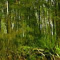 Artistic Water Reflections by LeeAnn McLaneGoetz McLaneGoetzStudioLLCcom