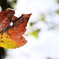 Artsy-fartsy Autumn I by Theresa Johnson