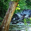 As The River Runs Through It by Maria Urso