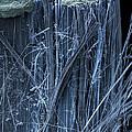 Asbestos, Sem by Ted Kinsman