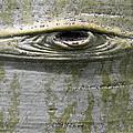 Aspen Eye by John Myers