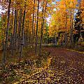 Aspen Lane by Carol Cavalaris
