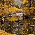Aspen Leaves On Stream by L J Oakes