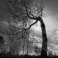 Aspen Silhouette by Alyssa McClellan