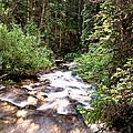 Aspen Stream by Endre Balogh