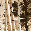 Aspens Llll by Kathy Sampson