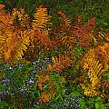 Asters And Ferns by Ron Jones