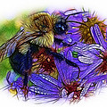 Asters With Dew And Bumblebee by Judi Bagwell