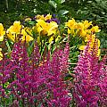 Astilbe And Lilies by Douglas Barnett